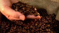 Video of checking coffee beans in real slow motion video