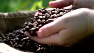 Video of grabbing coffee beans-real 1080p slow motion 250fps video