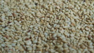 Video of green raw coffee bean pile texture background before roast video