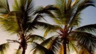 video of Maho Bay, St.John, US Virgin Islands video