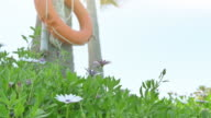 Video of orange lifebuoy on the palm tree in 4K video