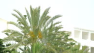 Video of palm tree in 4K video