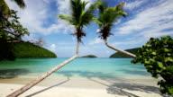 video of palm trees at Maho Bay Beach, St.John, USVI video