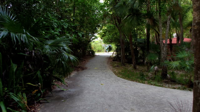 video of pathway at Trunk Bay beach, St John video
