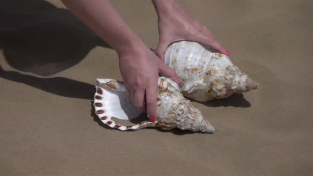 Video of picking shell on the beach in real slow motion video
