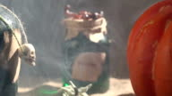 HD Video Of Pumpkin And Poison Bottle In Spooky Atmosphere video