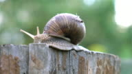 Video of snail on the tree stump in 4K video
