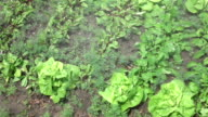 Video of spraying organic vegetables in real slow motion video