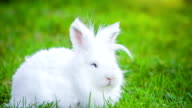 Video of white rabbit outdoors video
