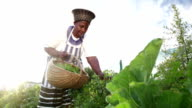 Video Portrait African business woman harvesting herbs video