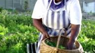 Video Portrait African Farmer video