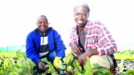 Video portrait of African Organic Farmers high five video