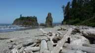 HD video Sea stacks and shoreline Olympic National Park video