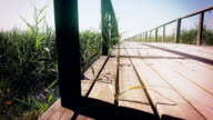 View from empty wooden pier at reed land under blue sky. Dolly. Close up video