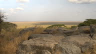 CLOSE UP: View from the top of the hill on African savannah grassland lowlands video