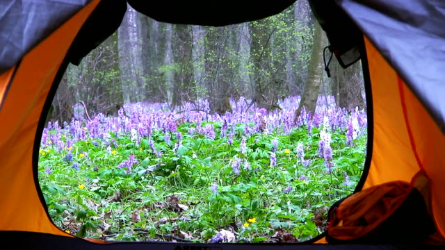View from the tourist tents on a spring forest. Sunset time. video