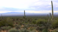 View in Tucson Mountain Park video