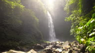 View of a waterfall in the middle of a tropical rainforest video