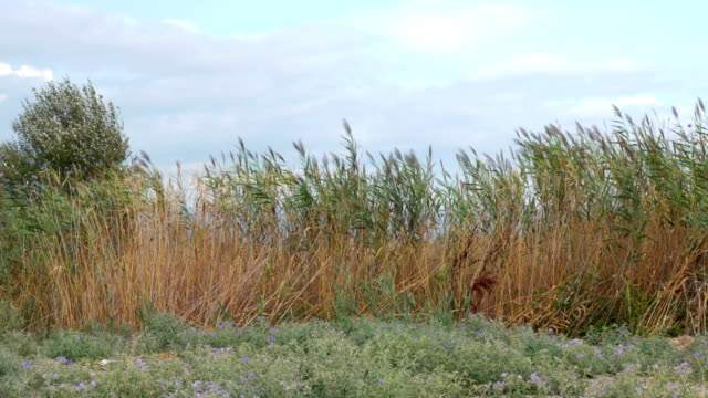 View of agricultural field with tall grass in windy weather at summer video