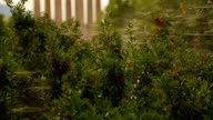 View of ancient Greek temple remains through green bushes with spider web video