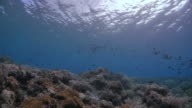 View of beautiful tropical coral reef undersea video