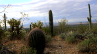 View of cactus group in Tucson Mountain Park video