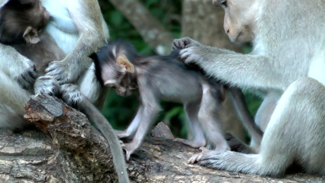 View of monkey family video
