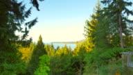 View of Pacific West Coast Island Through Trees, Jib Crane Shot video