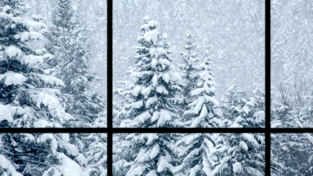 View of pines through window, loopable video