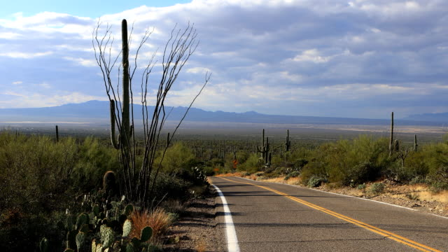View of roadside in Tucson Mountain Park video