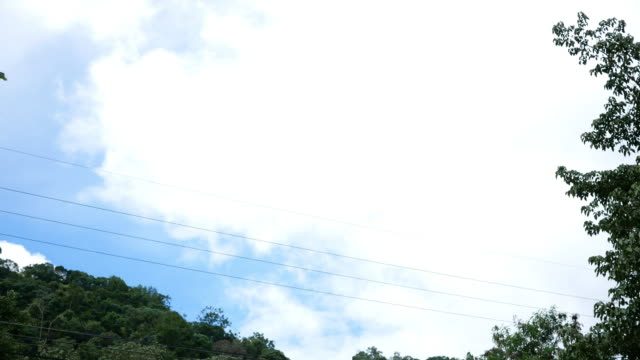 View of sky in forest video