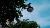 View of street flashlight among green leaf of tree. Blue sky. Summer day video
