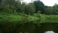 View of the coast of the river from the passing kayak. video