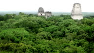 View of Tikal, Guatemala video