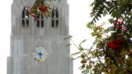 view of tower of church with clock from branches of tree with red berries, focus is moving video
