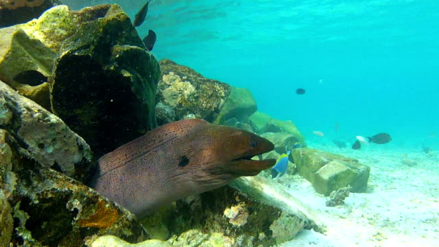 View Of Underwater Tropical Ocean With Moray Eel video