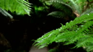 MACRO: View of young green lush fern with wooden bridge in background video