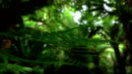 MACRO: View of young lush fern steam and its green leaves slowly moving in air video