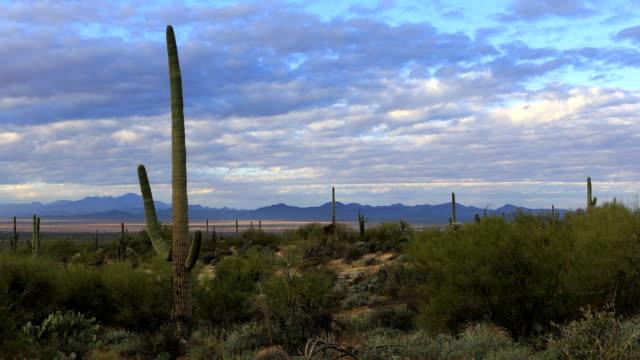 View Saguaro Cactus in Tucson Mountain Park video