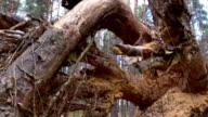 View through tree stump, 4k video