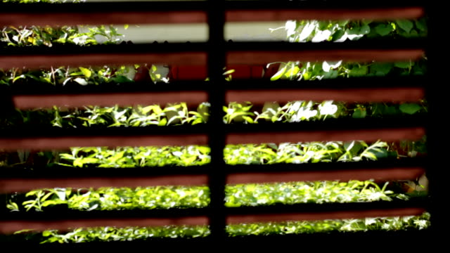 View trought window blinds on garden video