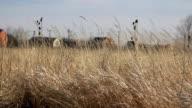 Village behind dry grass field video