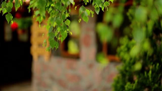 Village house under a birch video