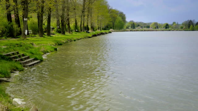 Village pond with tree alley on shore. Lake surface in wind. video