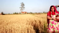 Village women standing in the field of wheat video