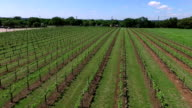 Vineyard Aerial Fly Over Rows of Wine growing video