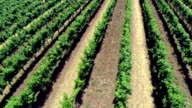 Vineyard Aerial video