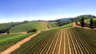 Vineyard Aerial video
