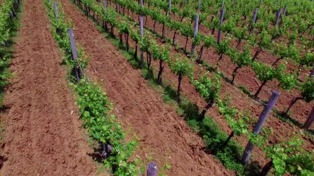 4K- Vineyard aerial view video