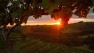 T/L Vineyard at sunrise video